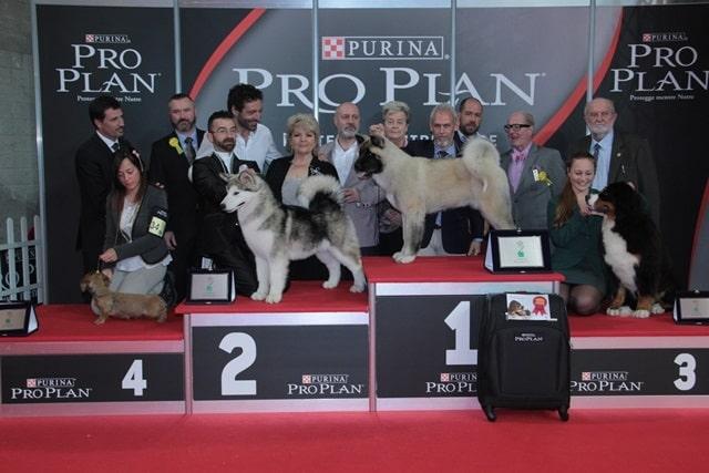 Pro Plan Cup 2014: eletto a Rimini il più bel cucciolo d'Italia