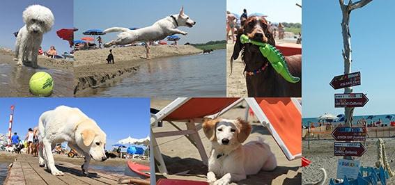 BauBeach: riapre la prima spiaggia per cani con numerose novità bio-sport-social-gourmet