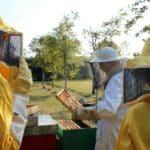 Fattoria Scaldasole e le api
