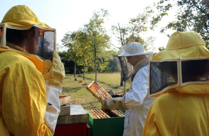 """Fattoria Scaldasole a sostegno del progetto """"Bee my Future"""" di LifeGate"""