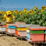 """Concorso """"Le api e l'olio"""" di Monini, in partnership con LifeGate, a tutela delle api nel Gargano"""