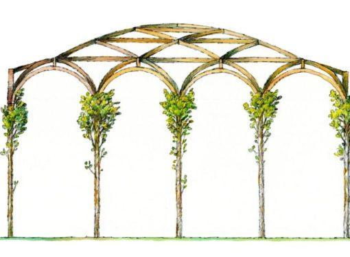 Orticola per Leonardo riproduce nella Sale delle Asse del Castello Sforzesco la Pergola dei Gelsi