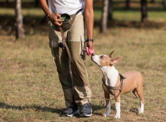 Da Ca' Zampa il Galateo Metropolitano per educare il cane alla città