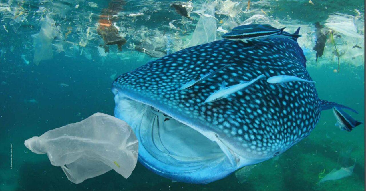 WWF: basta plastica nel mare!