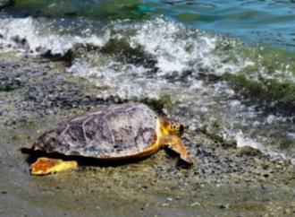 Goro: si inaugura il Pronto Soccorso e Cura per tartarughe marine
