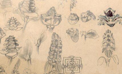 I disegni giovanili di le Corbusier