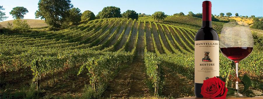 Fattoria Mantellassi, storia e passione per le vigne